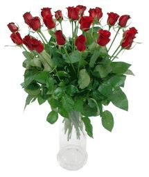 Çanakkale online çiçek gönderme sipariş  11 adet kimizi gülün ihtisami cam yada mika vazo modeli