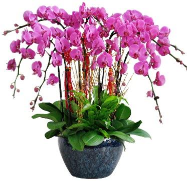 9 dallı mor orkide  Çanakkale İnternetten çiçek siparişi