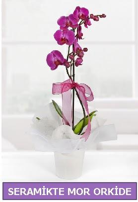 Seramik içerisinde birinci kalite tek dallı mor orkide  Çanakkale internetten çiçek satışı