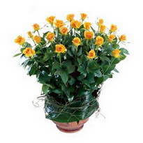 Çanakkale online çiçekçi , çiçek siparişi  10 adet sari gül tanzim cam yada mika vazoda çiçek