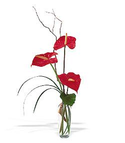 Çanakkale hediye sevgilime hediye çiçek  cam yada mika Vazoda 3 adet  antoryum