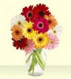 Çanakkale çiçek siparişi sitesi  cam yada mika vazoda 15 özel gerbera