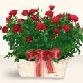 Çanakkale internetten çiçek satışı  11 adet kirmizi gül sepette