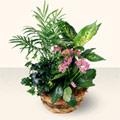 Çanakkale cicek , cicekci  5 adet canli çiçek sepette
