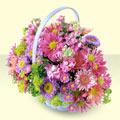 Çanakkale hediye çiçek yolla  bir sepet dolusu kir çiçegi  Çanakkale çiçekçiler