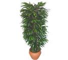 Çanakkale hediye sevgilime hediye çiçek  Özel Mango 1,75 cm yüksekliginde