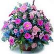 karisik mevsim kir çiçekleri  Çanakkale çiçekçiler