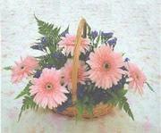 gerbera çiçeklerinde sepet   Çanakkale internetten çiçek siparişi