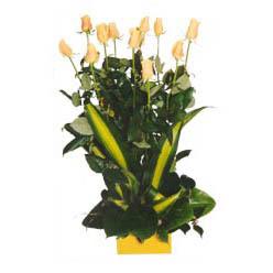 12 adet beyaz gül aranjmani  Çanakkale çiçek , çiçekçi , çiçekçilik