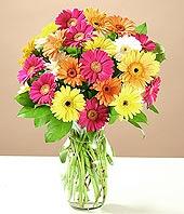 Çanakkale çiçek gönderme  17 adet karisik gerbera