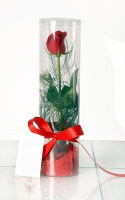 Çanakkale internetten çiçek siparişi  Silindir vazoda tek kirmizi gül