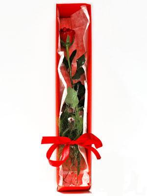 Çanakkale hediye çiçek yolla  1 adet kutuda gül