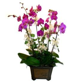 Çanakkale yurtiçi ve yurtdışı çiçek siparişi  4 adet orkide çiçegi