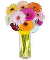 Çanakkale çiçek mağazası , çiçekçi adresleri  Farkli renklerde 15 adet gerbera çiçegi
