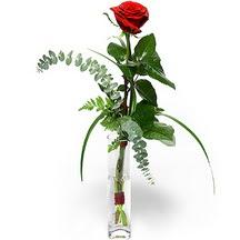 Çanakkale İnternetten çiçek siparişi  Sana deger veriyorum bir adet gül cam yada mika vazoda