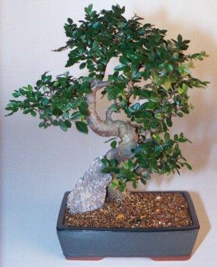 Çanakkale çiçekçiler  ithal bonsai saksi çiçegi  Çanakkale hediye sevgilime hediye çiçek