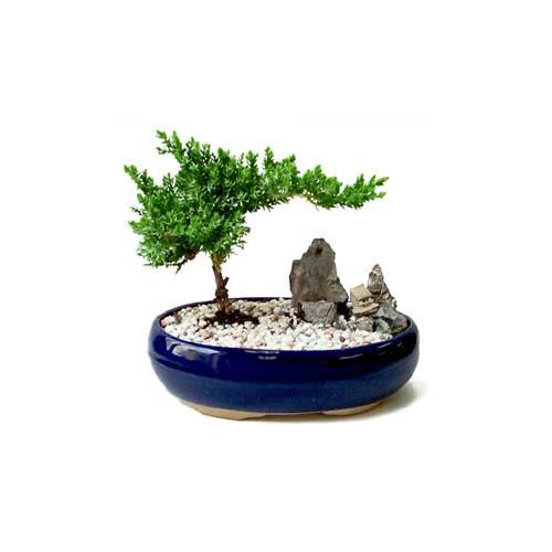 ithal bonsai saksi çiçegi  Çanakkale çiçek siparişi vermek