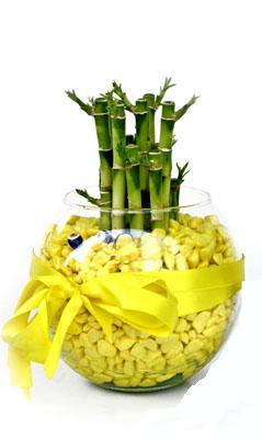 cam fanus içerisinde bambo  Çanakkale çiçek online çiçek siparişi