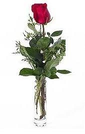 Vazo içerisinde 1 adet kirmizi gül  Çanakkale online çiçekçi , çiçek siparişi