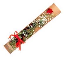 1 adet kirmizi gül  Çanakkale online çiçek gönderme sipariş