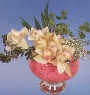 Çanakkale çiçek satışı  Dal orkide kalite bir hediye