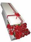 Çanakkale online çiçek gönderme sipariş  11 adet 1.kalite magnum güller