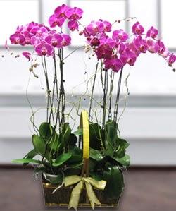 4 dallı mor orkide  Çanakkale ucuz çiçek gönder