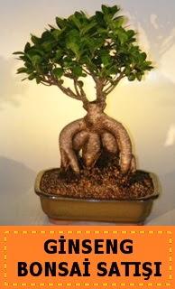Ginseng bonsai satışı japon ağacı  Çanakkale yurtiçi ve yurtdışı çiçek siparişi