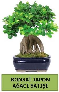 Bonsai japon ağacı satışı  Çanakkale cicek , cicekci