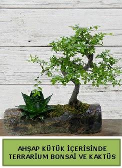 Ahşap kütük bonsai kaktüs teraryum  Çanakkale çiçek mağazası , çiçekçi adresleri