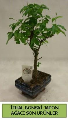 İthal bonsai japon ağacı bitkisi  Çanakkale çiçek yolla