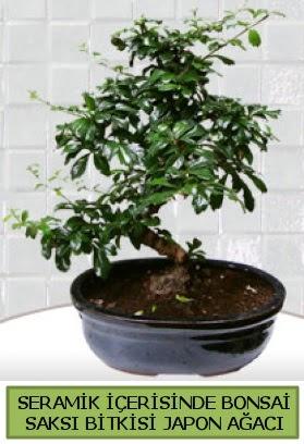 Seramik vazoda bonsai japon ağacı bitkisi  Çanakkale hediye sevgilime hediye çiçek
