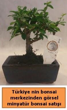 Japon ağacı bonsai satışı ithal görsel  Çanakkale internetten çiçek siparişi