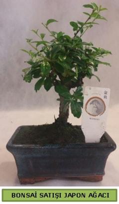 Minyatür bonsai ağacı satışı  Çanakkale çiçek siparişi vermek