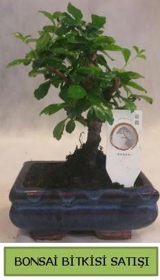 Bonsai ithal görsel minyatür japon ağacı  Çanakkale uluslararası çiçek gönderme