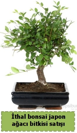 İthal bonsai saksı çiçeği Japon ağacı satışı  Çanakkale internetten çiçek satışı