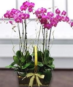 7 dallı mor lila orkide  Çanakkale çiçekçiler