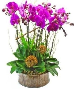 Ahşap kütükte lila mor orkide 8 li  Çanakkale çiçek online çiçek siparişi