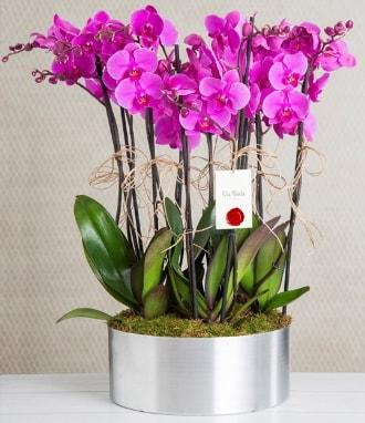 11 dallı mor orkide metal vazoda  Çanakkale çiçekçiler
