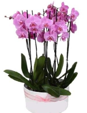 Beyaz seramik içerisinde 7 dallı mor orkide  Çanakkale online çiçek gönderme sipariş