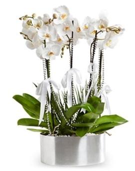 Beş dallı metal saksıda beyaz orkide  Çanakkale internetten çiçek siparişi
