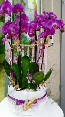 Seramik vazoda 4 dallı mor lila orkide  Çanakkale güvenli kaliteli hızlı çiçek