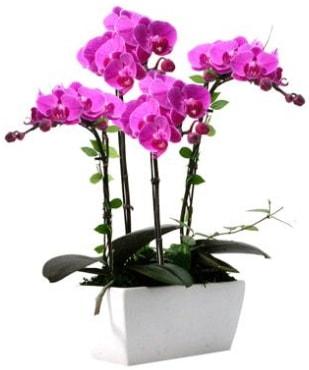 Seramik vazo içerisinde 4 dallı mor orkide  Çanakkale cicek , cicekci