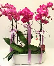 Beyaz seramik içerisinde 4 dallı orkide  Çanakkale uluslararası çiçek gönderme