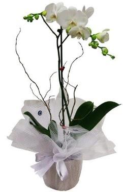 Tek dallı beyaz orkide  Çanakkale yurtiçi ve yurtdışı çiçek siparişi