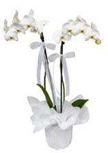2 dallı beyaz orkide  Çanakkale ucuz çiçek gönder