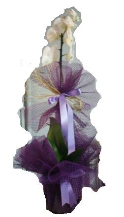 Tek dallı beyaz orkide süper kalite ithal  Çanakkale hediye sevgilime hediye çiçek