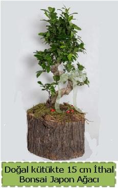 Doğal kütükte İthal bonsai japon ağacı  Çanakkale çiçek siparişi vermek