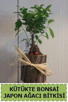 Kütük içerisinde doğal bonsai ağacı  Çanakkale online çiçek gönderme sipariş