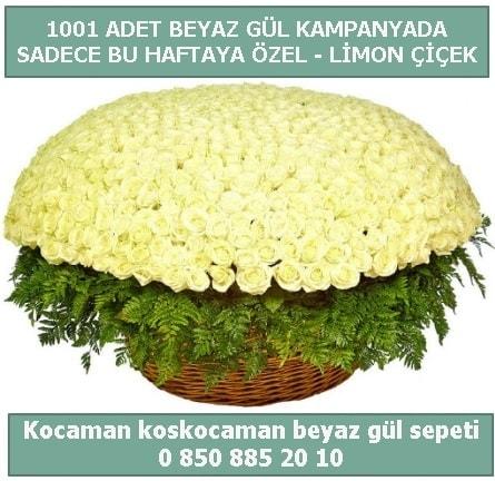 1001 adet beyaz gül sepeti özel kampanyada  Çanakkale çiçekçiler